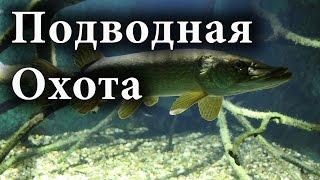 Подводная охота на Волге 2016.  Подводная охота для начинающих.