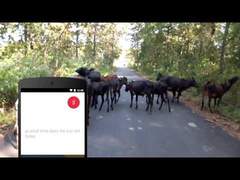 Ask the Google App - Cow Jam