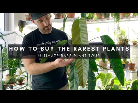 How To Buy And Source Rare Houseplants | Domestic Or Import Plants | Jake Series Part VI | Ep 32