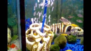 дополнительный кислород для аквариума