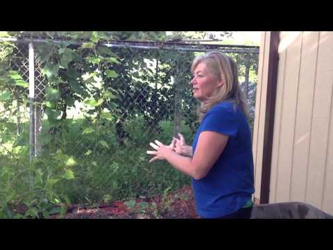Square Foot gardening: Your garden can be portable! Moving a bed to another location