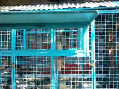 my new flyers' loft philippines 2012