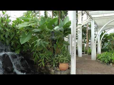 Conheça Curitiba PR - Flashes do Jardim Botanico #4