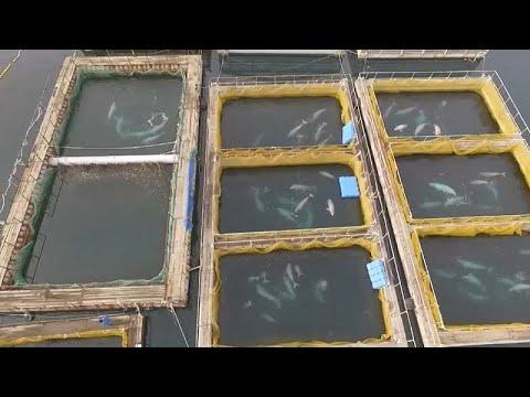 Final feliz para las ballenas encarceladas
