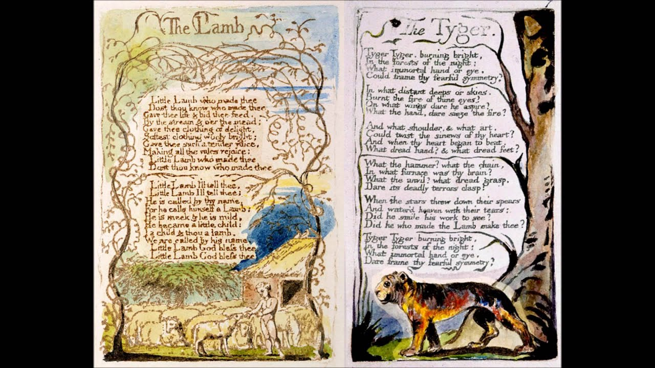 the lamb and the tiger The tyger (from songs of experience) by william blake tyger tyger burning bright in the forests of the night, what immortal hand or eye could frame thy fearful symmetry.