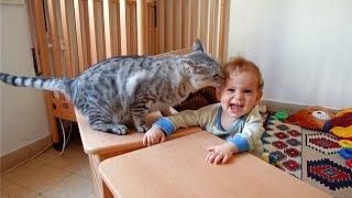 Коты и дети, лучшие друзья?! Cats and babies the best video.