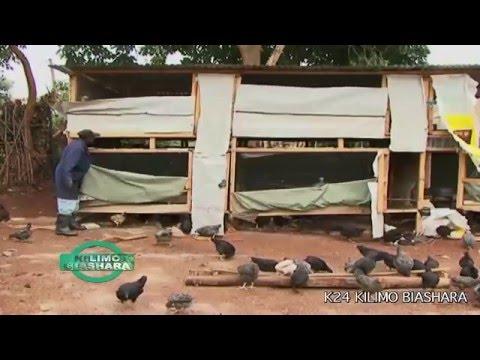 Kienyeji Chicken Business: Kilimo Biashara Kenya