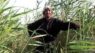 Marsh Arabs of Southern Iraq
