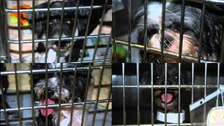 Instant video play gt alleged puppy mill closed in greene county