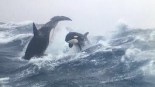 10 AMAZING FACTS About Orcas