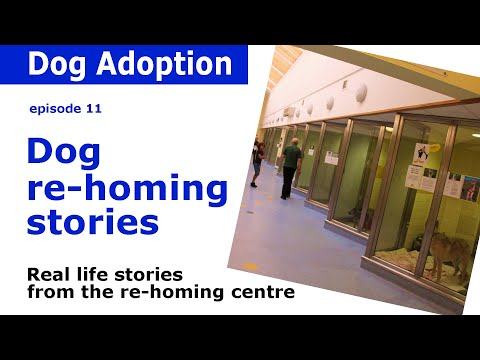 Dogs Trust Documentary - Episode 11