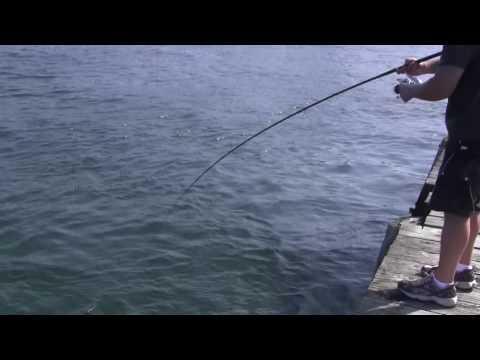 NYC Blackfish Fishing