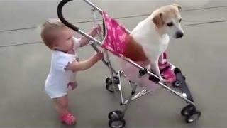 Τα Μωρά Και Τα Σκυλιά Να Λάβει Ο Ένας Τον Άλλο Για Μια Βόλτα - Αστείο Και Χαριτωμένο Συλλογή
