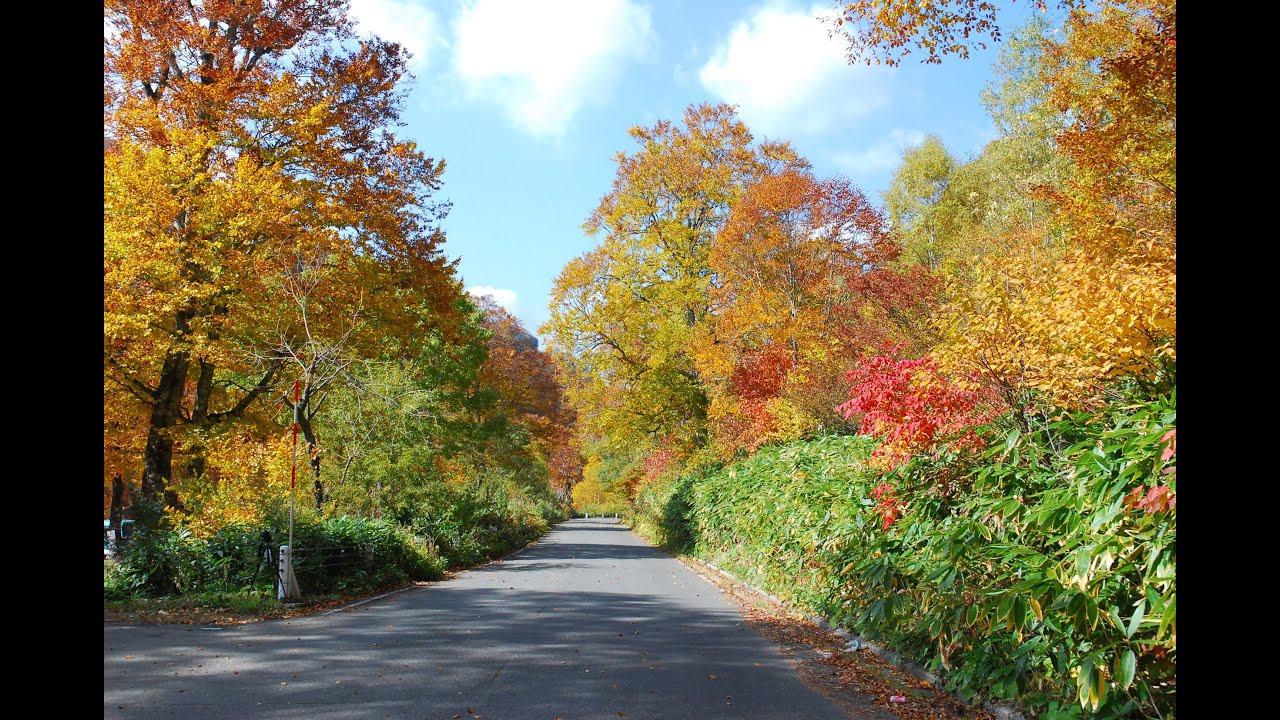 Autumn leaves drive 群馬県・秋の照葉峽の感動する紅葉ドライブ ...
