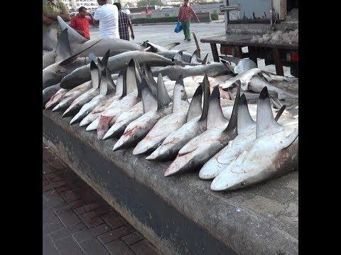 Could SharkWeek Go Extinct?