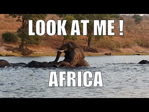 travel and adventure  - travel game of elephants in the chobe river Botswana africa