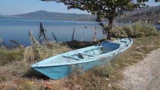 آلاف العناكب تجتاح أحد شواطئ اليونان (فيديو + صور)