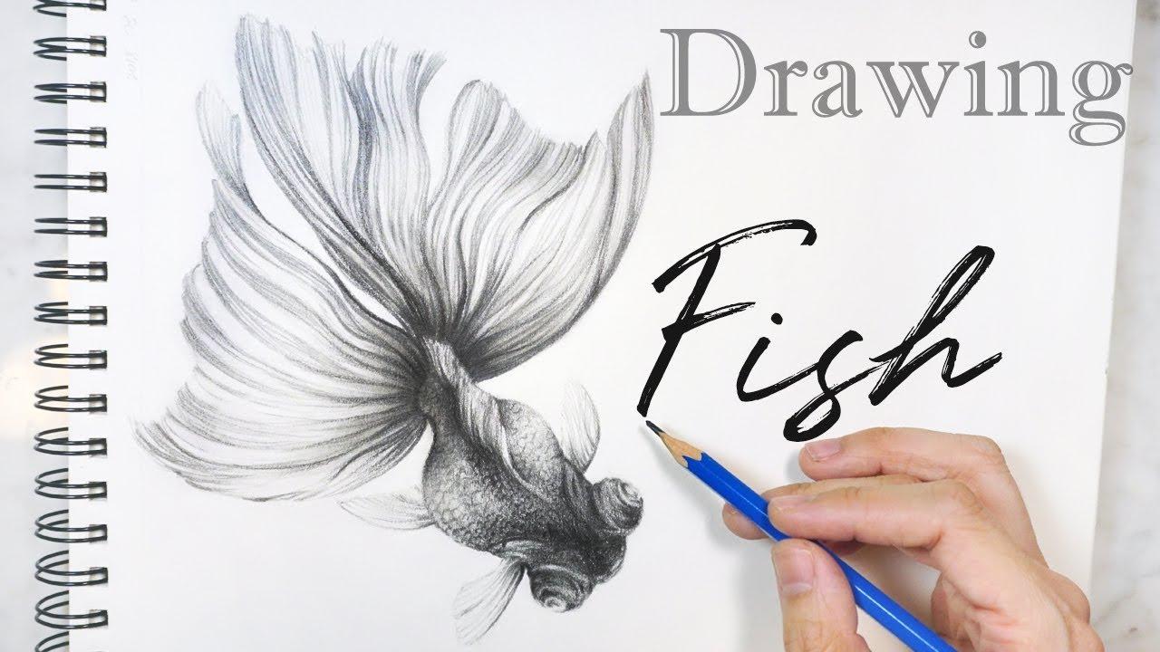 Drawing fish 🐟 pencil drawing goldfish sketch 鉛筆畫金魚素描