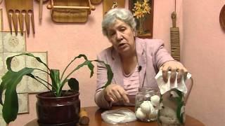 Экоудобрение из яичной скорлупы
