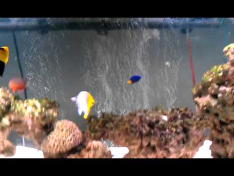 Adding a air stone to your aquarium youtube for Airstone for fish tank