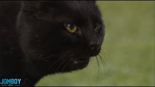Black Cat runs onto the field during the Giants vs Cowboys game, a breakdown