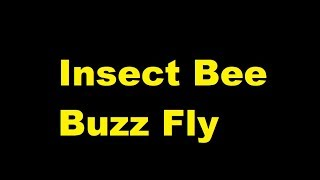 Insect Bee Buzz Fly -  sound effect