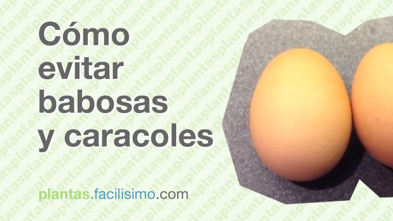 Caracoles De Jardin Que Comen Of C Mo Evitar Babosas Y Caracoles Youtube