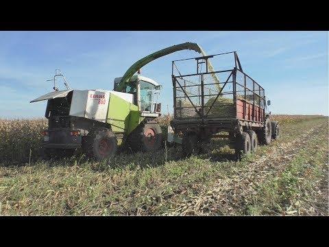 Уборка кукурузы на силос  Заготовка зеленной массы