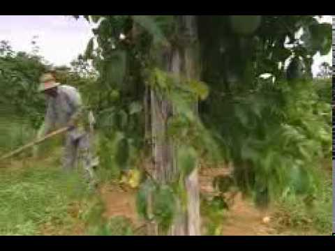 Nutrilite Vitamins - Certified Organic Brazil Farms - www.amway.ca/tscglobalcoltd
