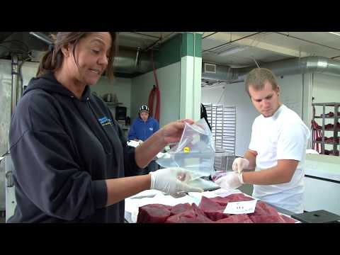 Bubba's Stiff And Flex Fillet Knives | Pros In Action