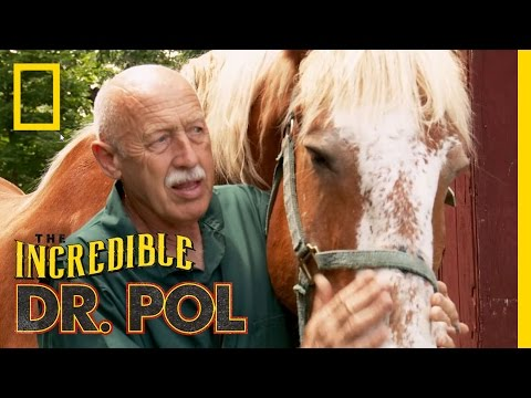 Animal Update: KC the Horse   The Incredible Dr. Pol