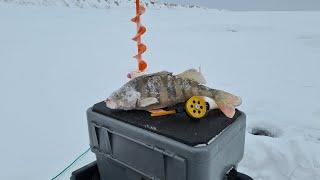 Все 33 удовольствия от рыбалки или что нужно, чтобы поймать крупного окуня
