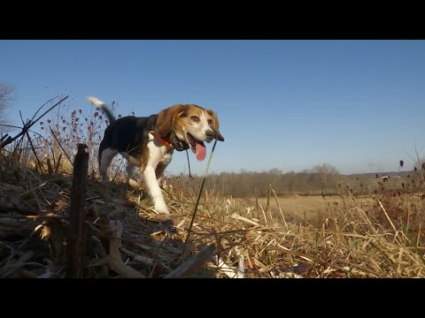 KY Rabbit Hunt with Good Friends and Great Dogs
