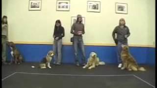 Woof Relay - Sirius Adult Dog Training