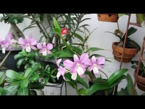 how to make orchids flower again