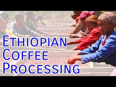 Best Ethiopian Coffee Brands