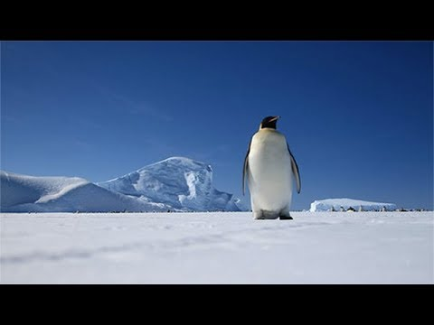 25 Facts About Antarctica That Are So Cool They're Freezing