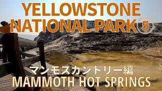 "[Yellowstone National Park⑤] Mammoth Hot Springs & Mud Volcano イエローストーン国立公園の""マンモスホットスプリングス""などバーチャル散策"