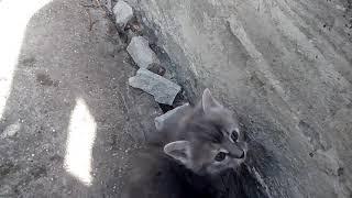 Котята на нашей даче Рыжего зовут Куки а серого Зовут Марко