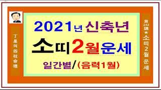 소띠 2월 운세 2021년 신축년-정시의 사주명리242강-소띠의 양력2월(음력1월)운세 입니다.