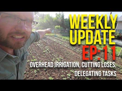 WEEKLY UPDATES - EP11 - May 23 - 28