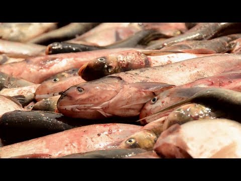 16x9 - Foreign Fish: Asian Carp's Invasion Of North America