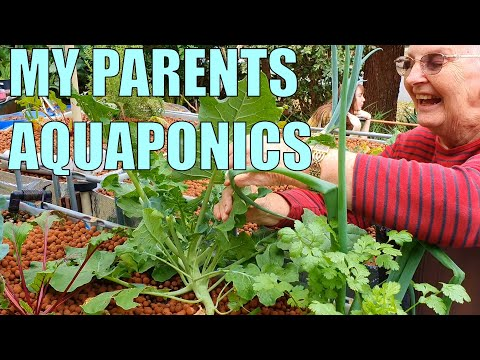 Aquaponics System | My Parents Split Flow Aquaponics System