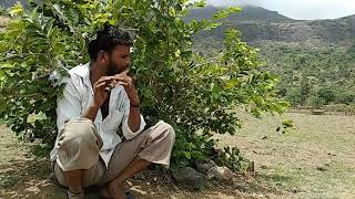 Sairat song played on flute.