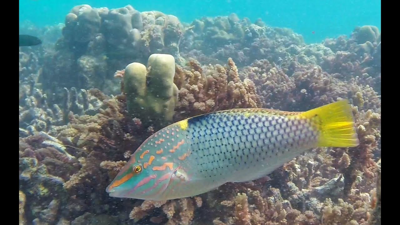 Image Gallery koh phi phi snorkeling