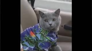 ЛУЧШИЕ ПРИКОЛЫ с котами 2016  Самые смешные видео про кошки и коты  Подборка приколов на канале Андр