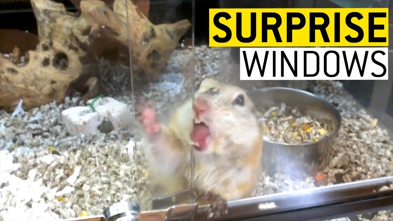 Surprise Windows || JukinVideo