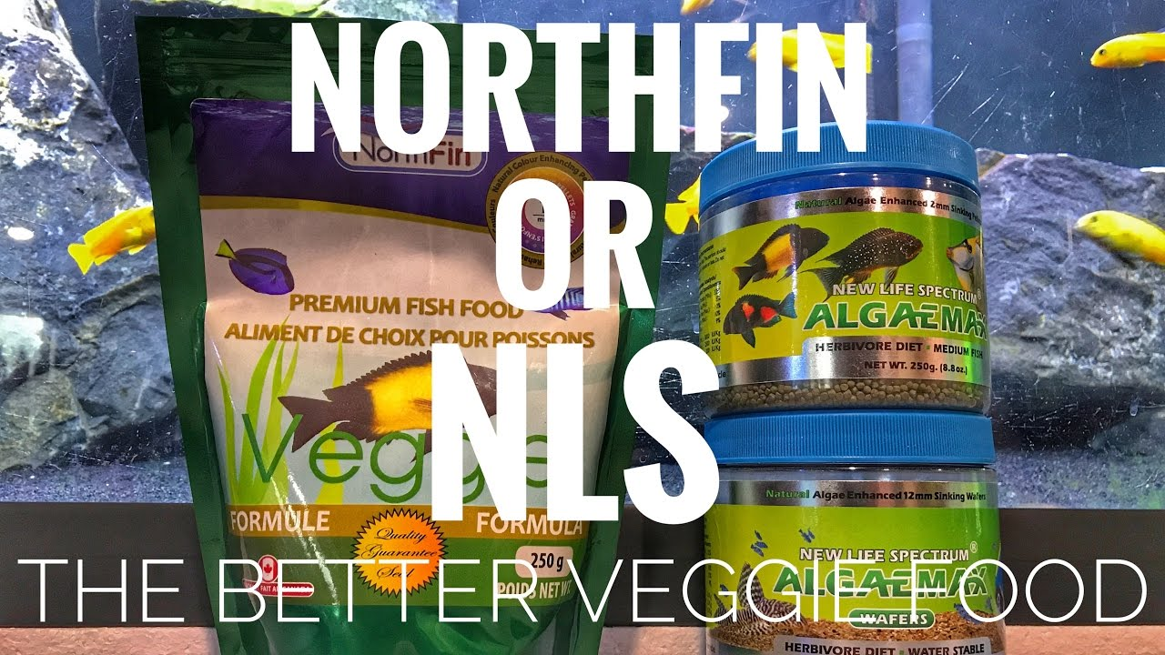 Northfin or nls the better veggie food youtube for Northfin fish food