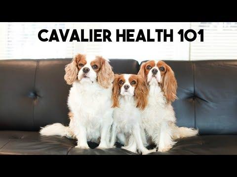 CAVALIER HEALTH 101 With Fera Pet Organics | Cav Mom Talks