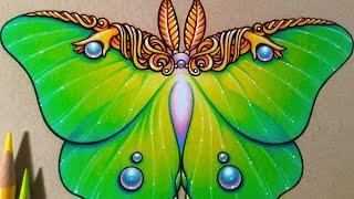 Luna Moth | Prismacolor Speed Drawing